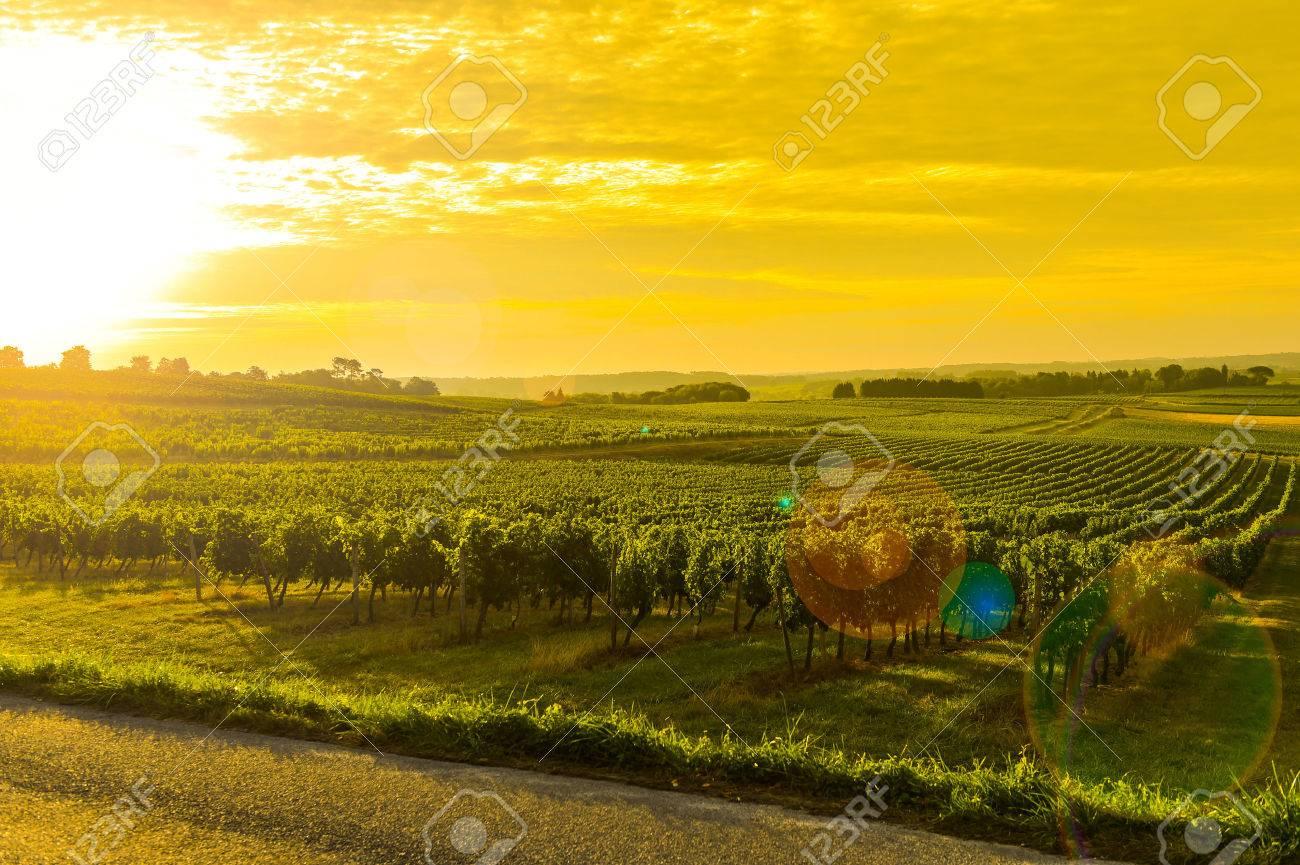Vineyard Sunrise - Bordeaux Vineyard-France, Aquitaine Stock Photo - 44151456