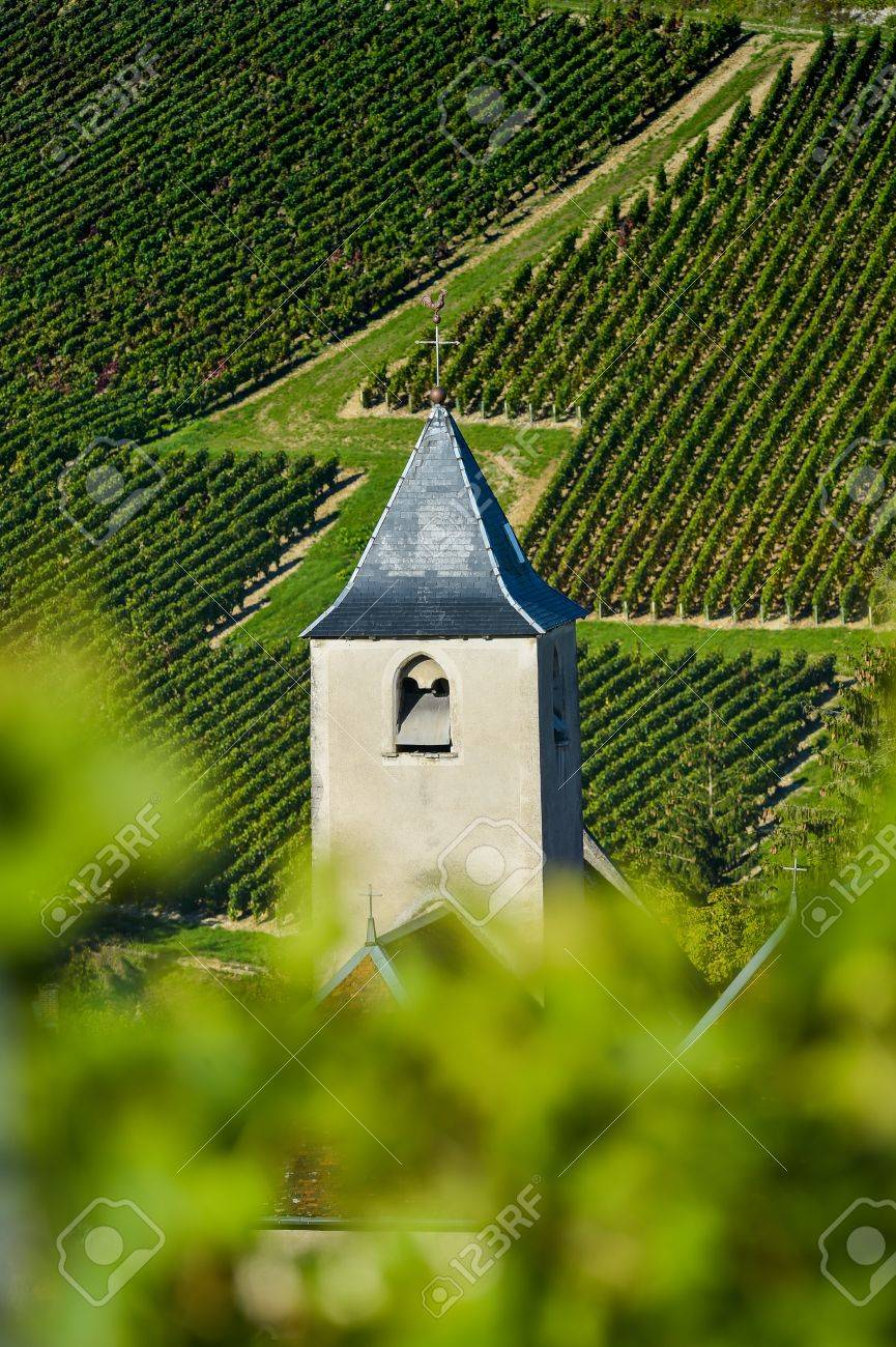Champagne vineyards in the Cote des Bar area of the Aube department near to Viviers sur Artaut, Champagne-Ardennes, France, Europe Stock Photo - 57178755