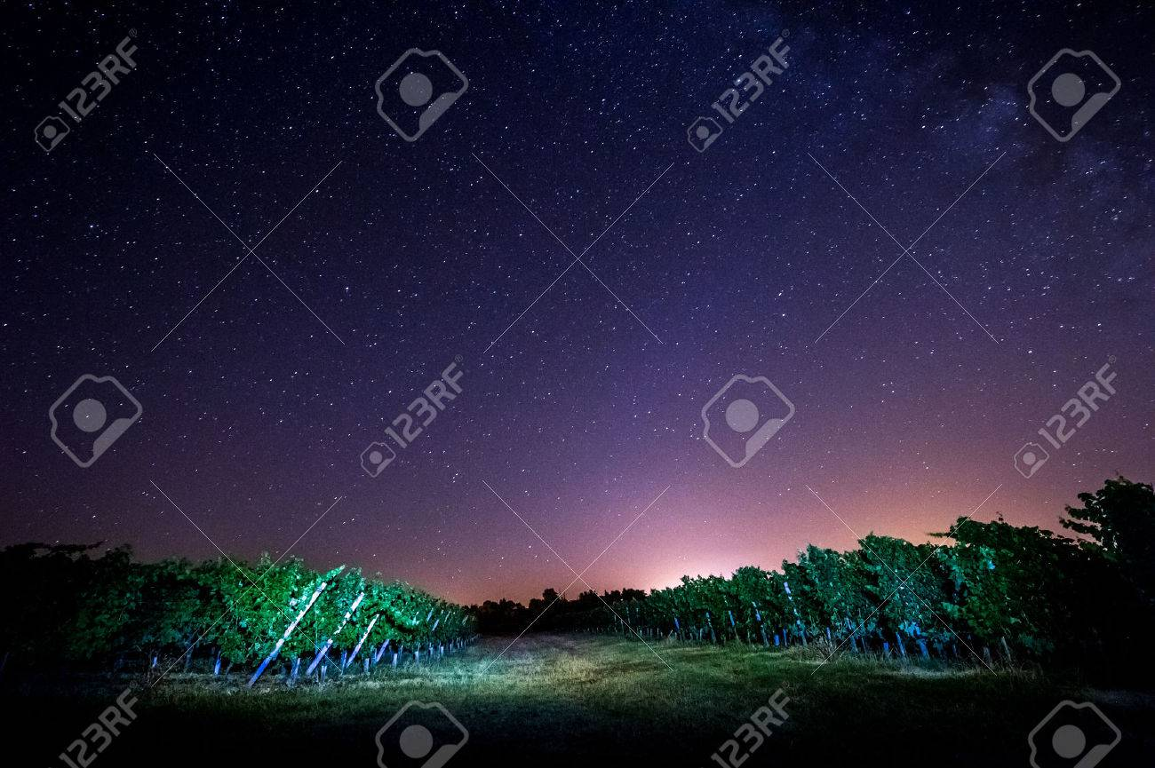 Grape field in the night, Bordeaux Wineyard, France Stock Photo - 62510287