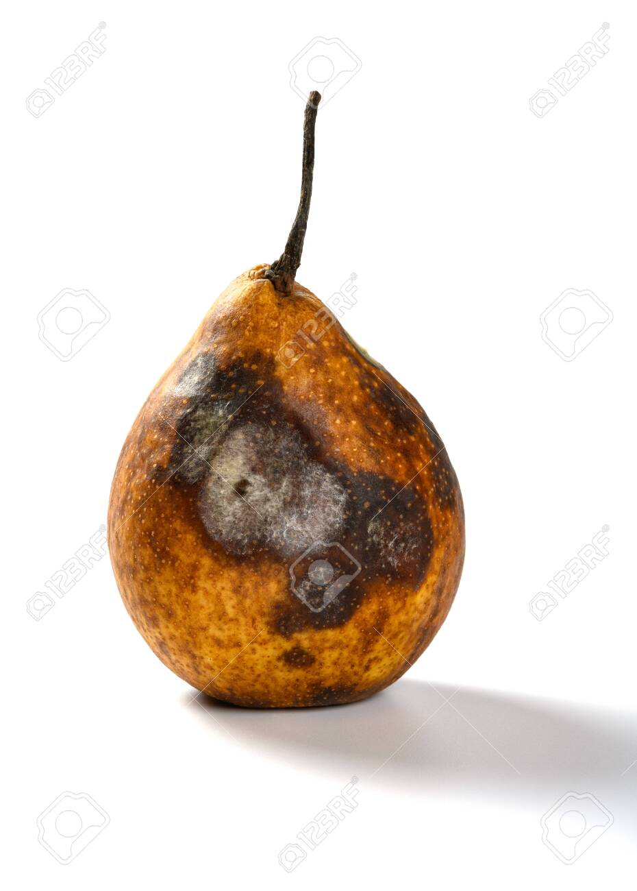 badly overripe pear on a white background - 126858261