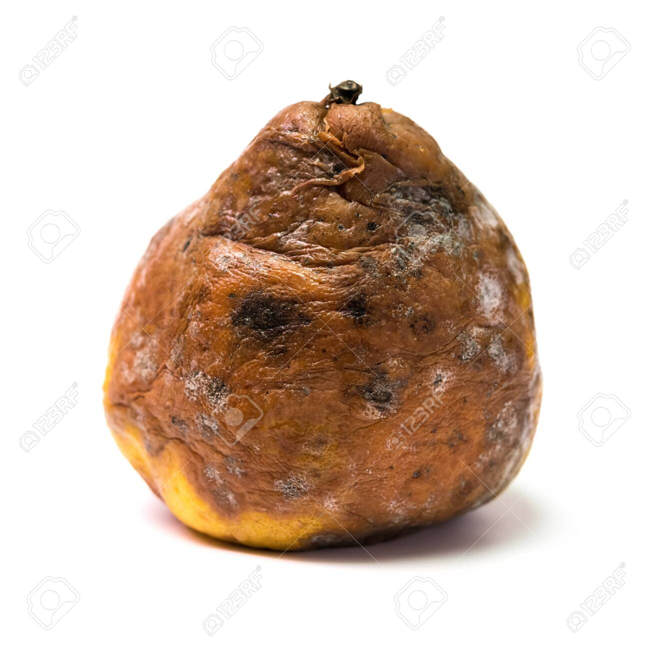 badly rotten pear on a white background - 145758586