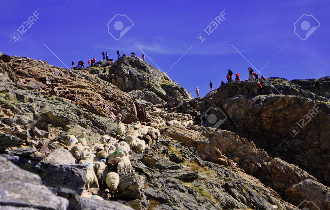 Traditional sheep homecomming procession in Val Senales Stock Photo - 7899788
