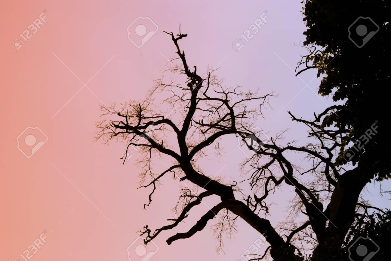 A dead tree against a blue sky Stock Photo - 9478092