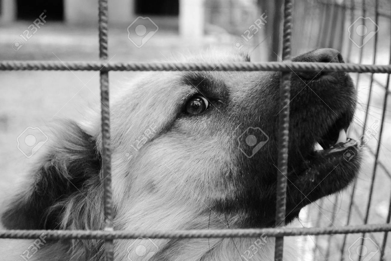 closeup of a dog cage Stock Photo - 10312009