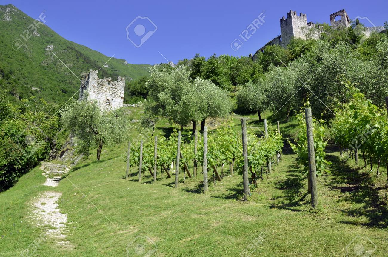 Scenic on fresh vineyards under deep blue sky Stock Photo - 15114418