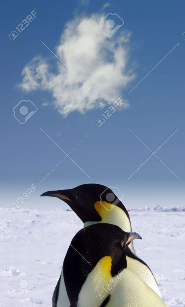 Two penguins in Antarctica Stock Photo - 511934