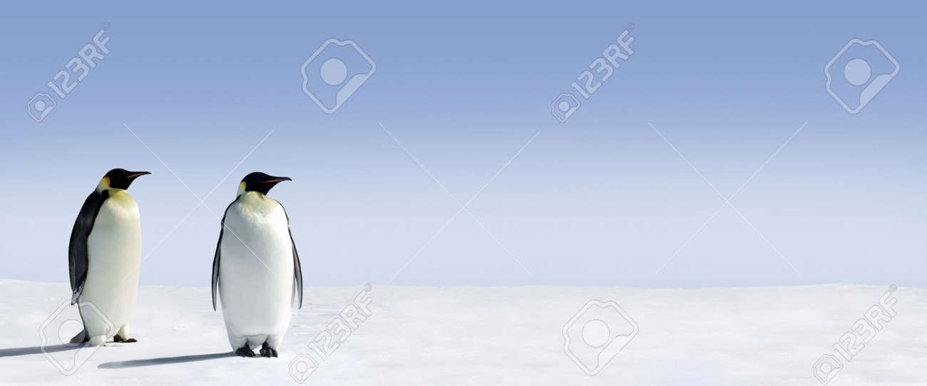 Penguins standing in the snow with lots of copy space Stock Photo - 2924126