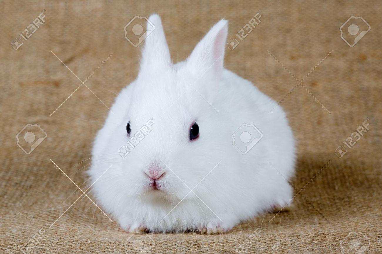 [Creación de Mascota] Sr Lopes 4964068-conejo-blanco-Foto-de-archivo