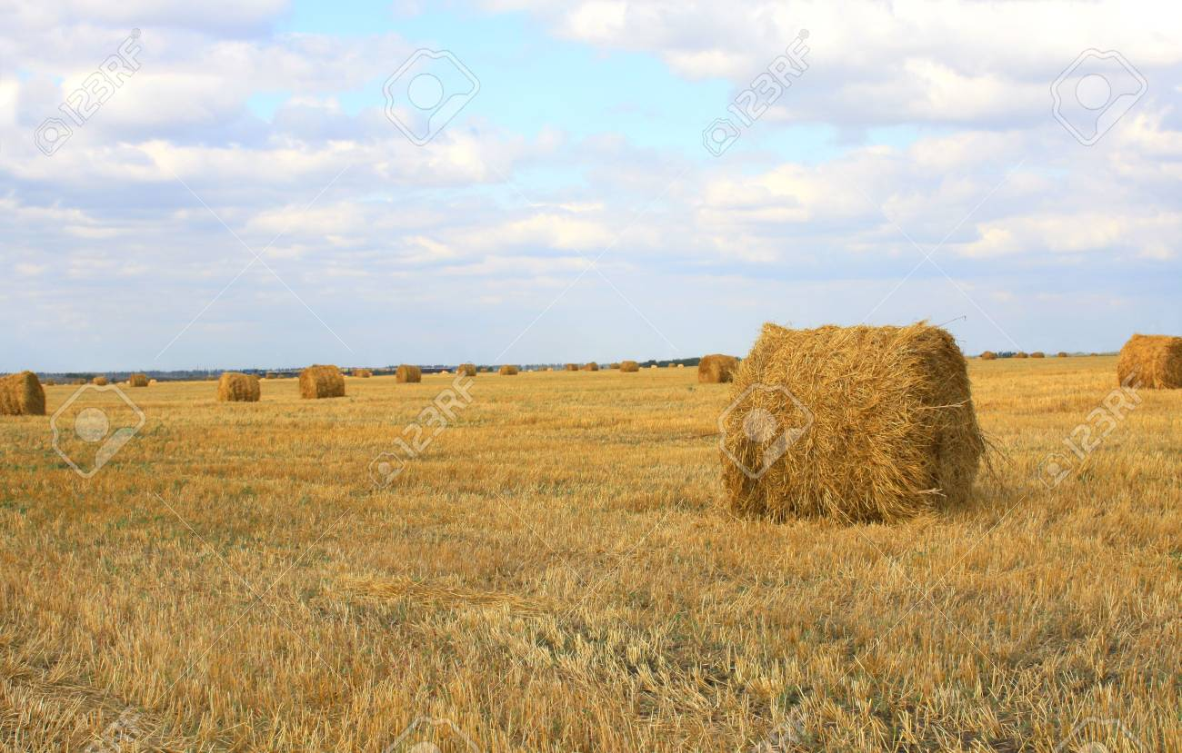 Haystacks on a background of the blue sky Stock Photo - 3508518