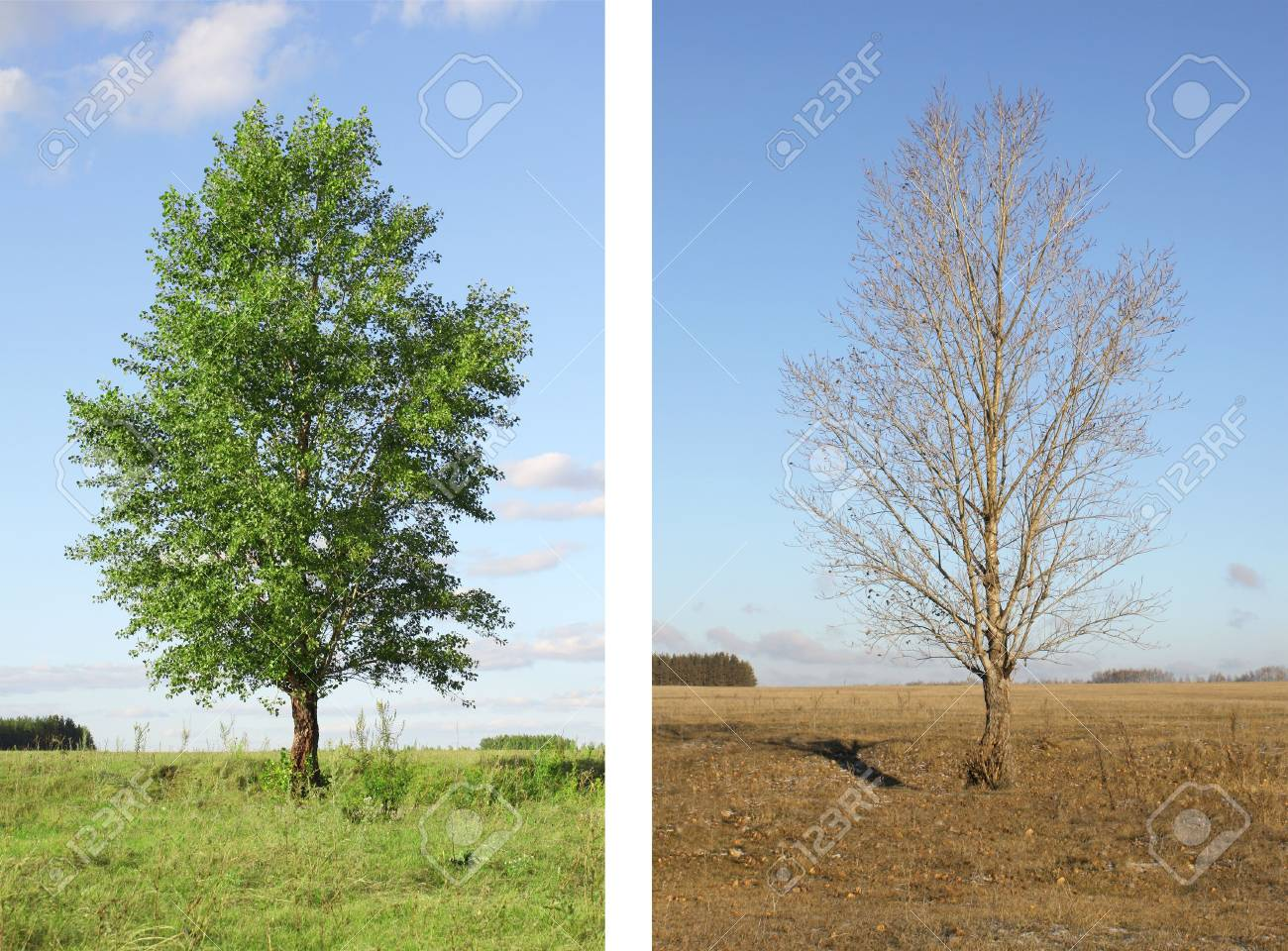 Two seasons - summer and autumn Stock Photo - 6071323