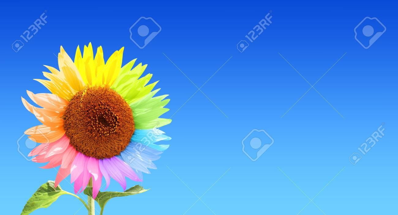 Sonnenblume Mit Blütenblätter, In Verschiedenen Farben Lackiert. Am ...