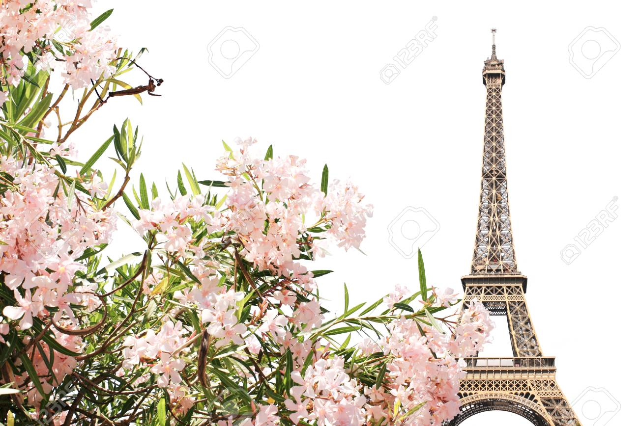 Famous Landmark Of Paris Eiffel Tower And Pink Flowers Isolated
