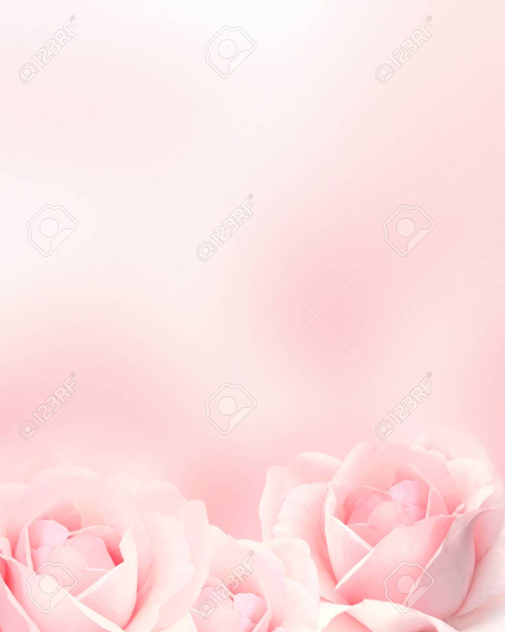 Blurred vertical background with three roses of pink color. Copy space for your text. Mock up template. Can be used for wallpaper, wedding card, web page banner - 143415888
