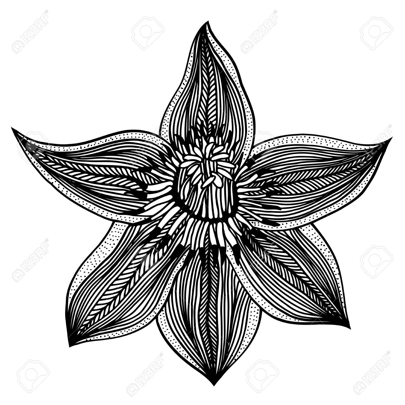 Vector sketch of flower lily hand draw illustration royalty free vector vector sketch of flower lily hand draw illustration izmirmasajfo