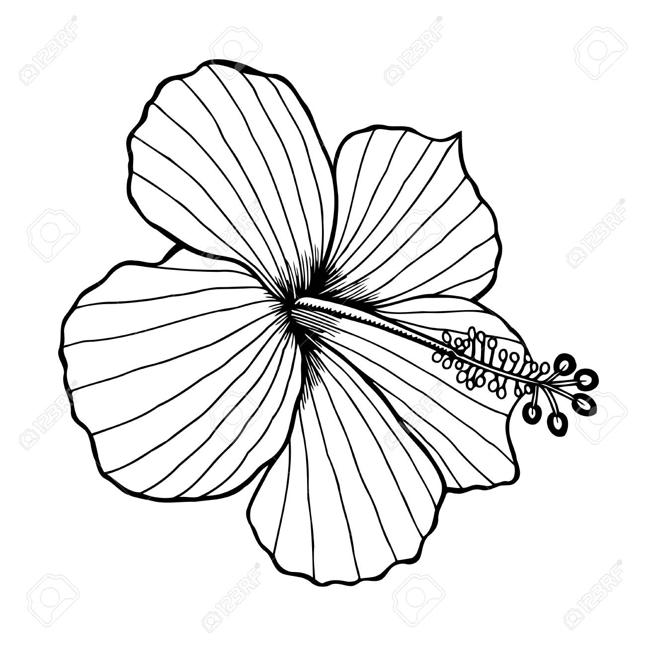 Hibiscus Flower Vector Graphic Illustration Black Image Isolated
