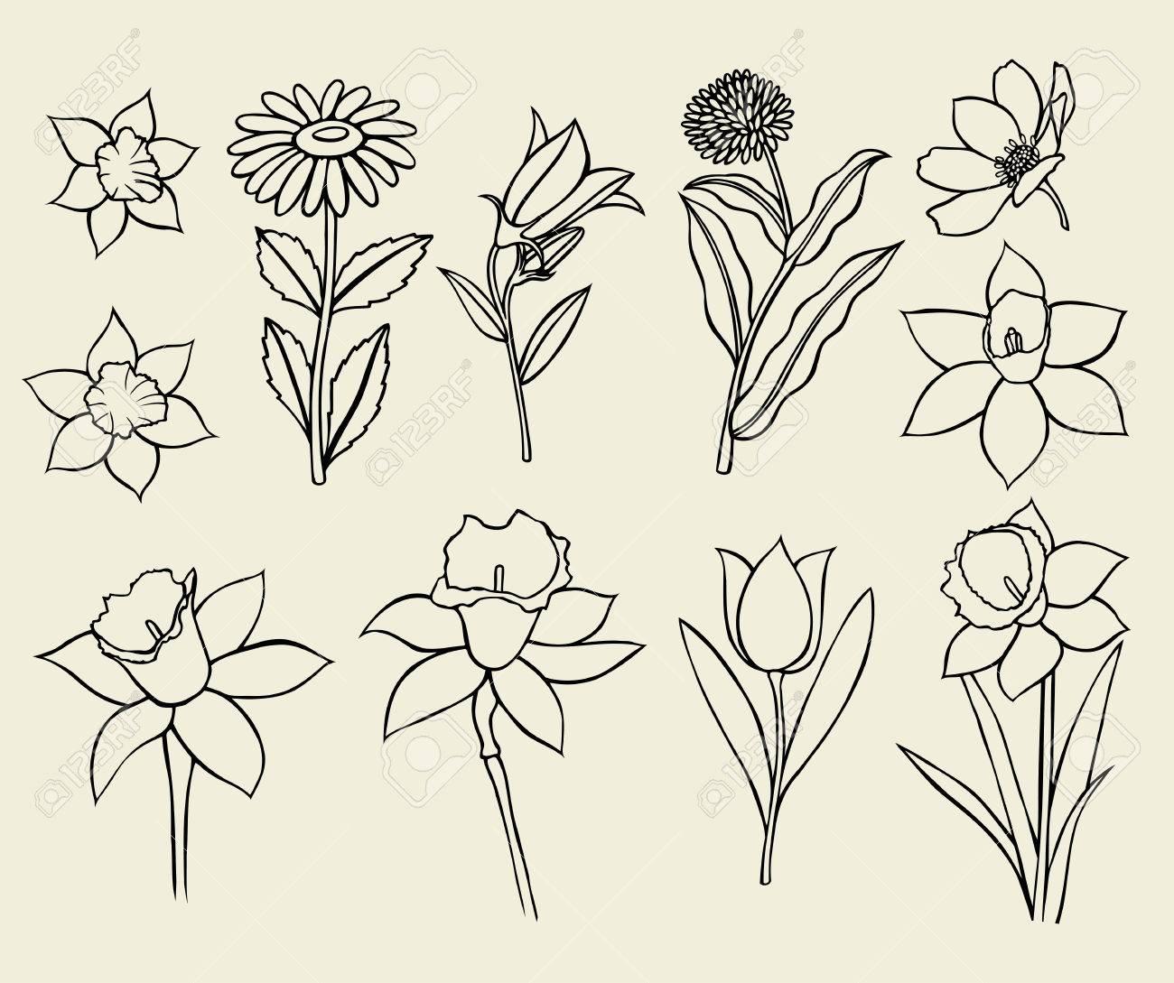 Conjunto De Flores Aisladas Sobre Fondo Blanco, Dibujo Botánico ...