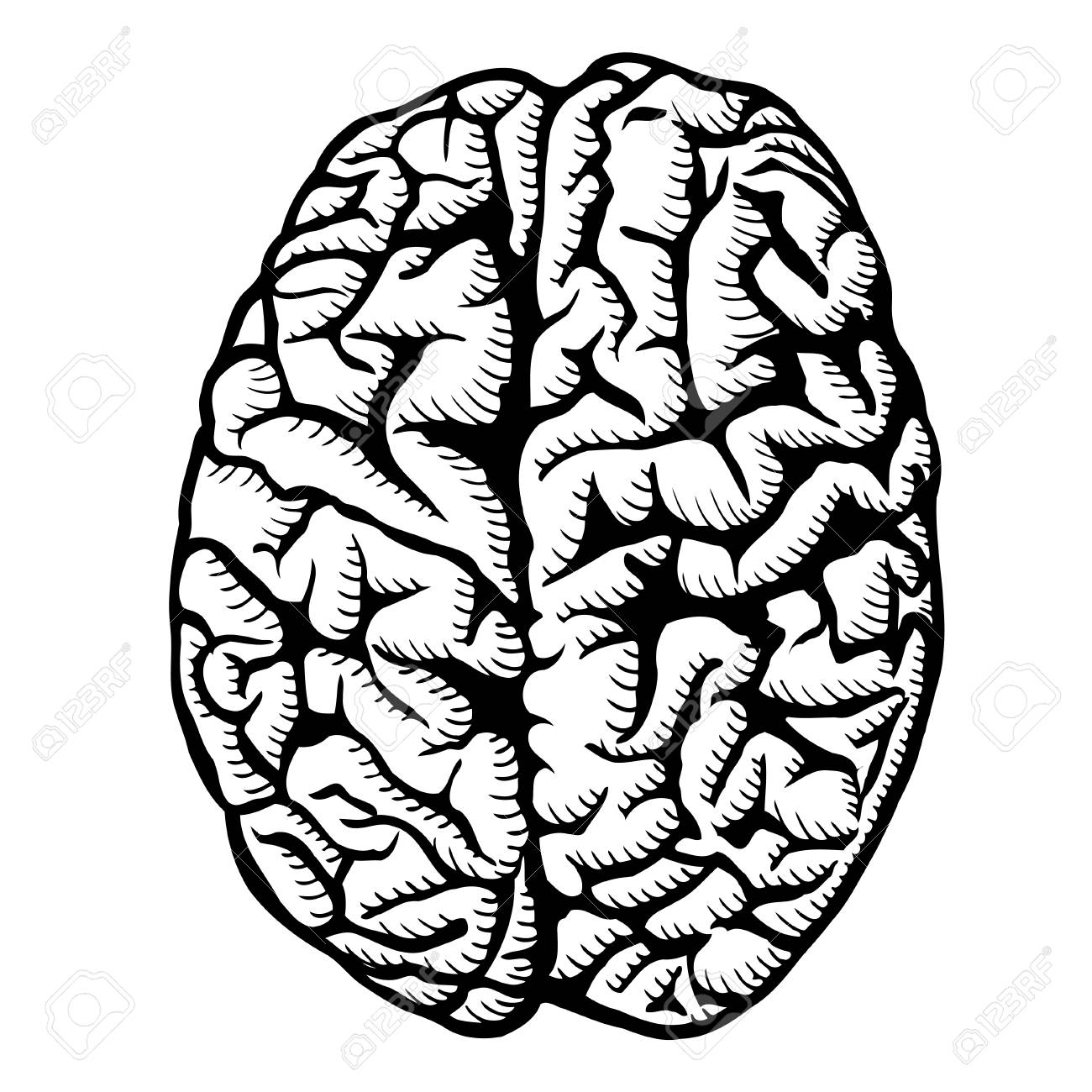 human brain vector illustration isolated on white royalty free rh 123rf com brain clipart vector brain vector art free download