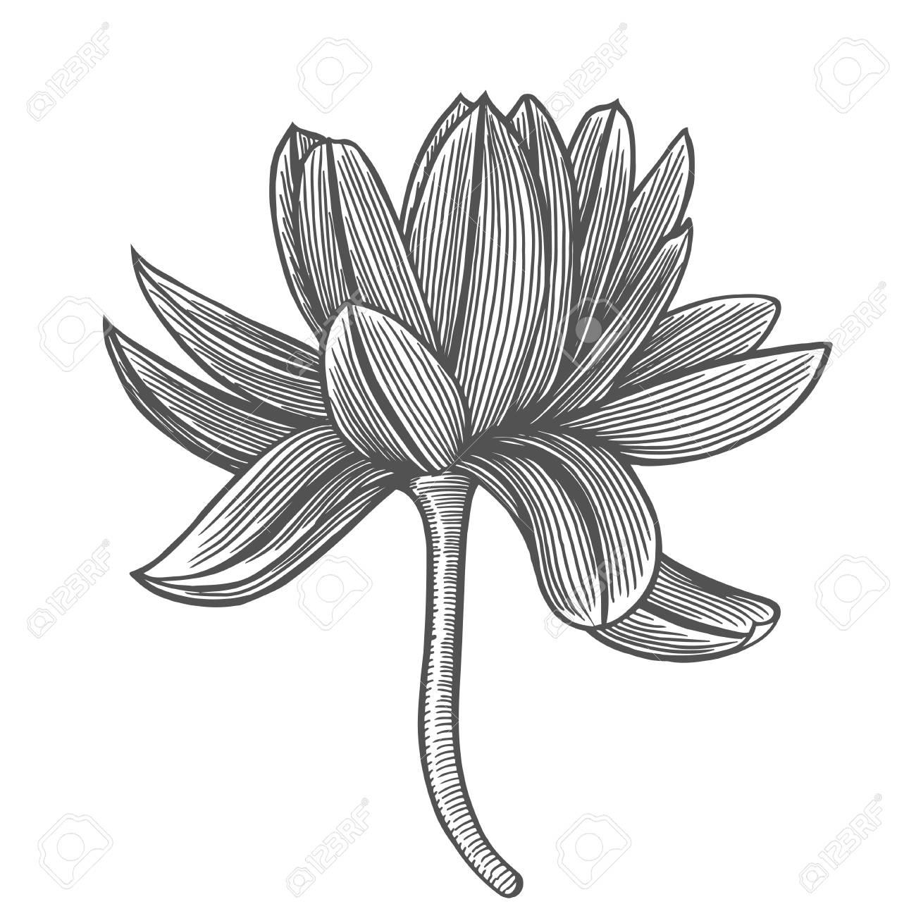 Lotus Flower Top View Line Pattern Vector Artwork Coloring