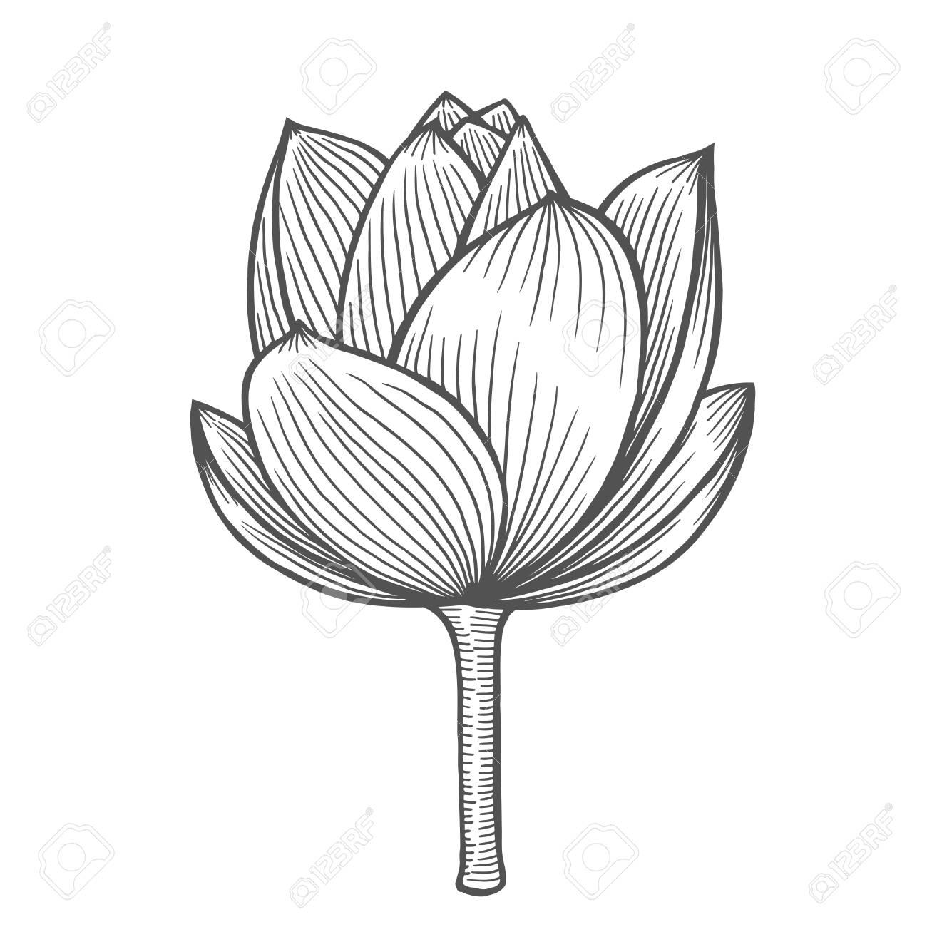 Lotus Flower Illustration Line Pattern Vector Artwork Coloring