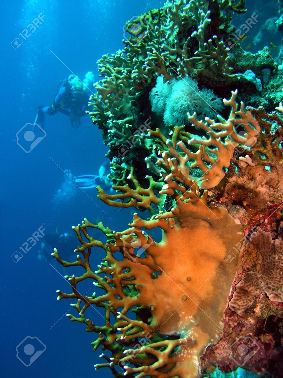 Coral and divers Stock Photo - 2729716