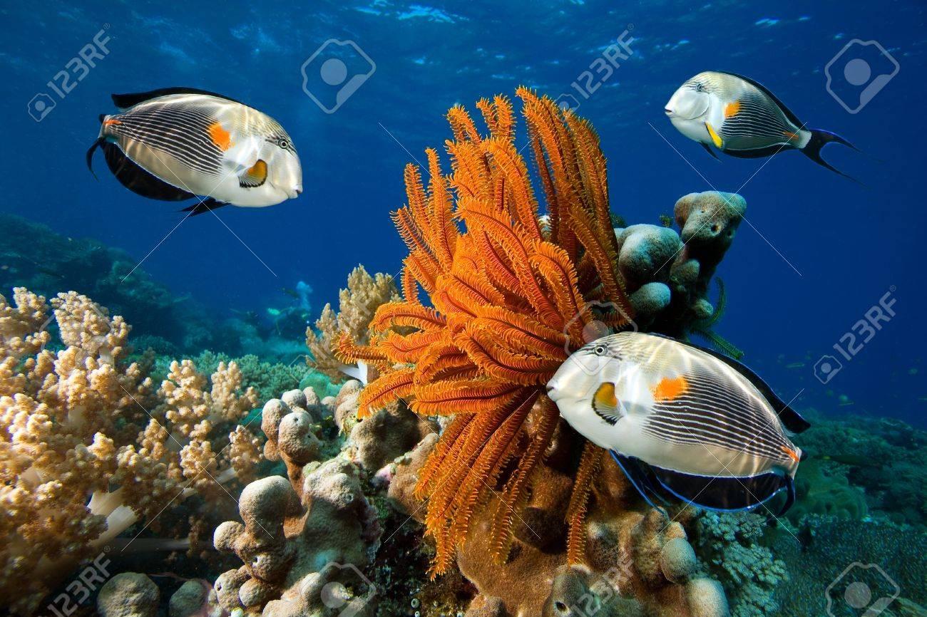 Underwater life Stock Photo - 14019156