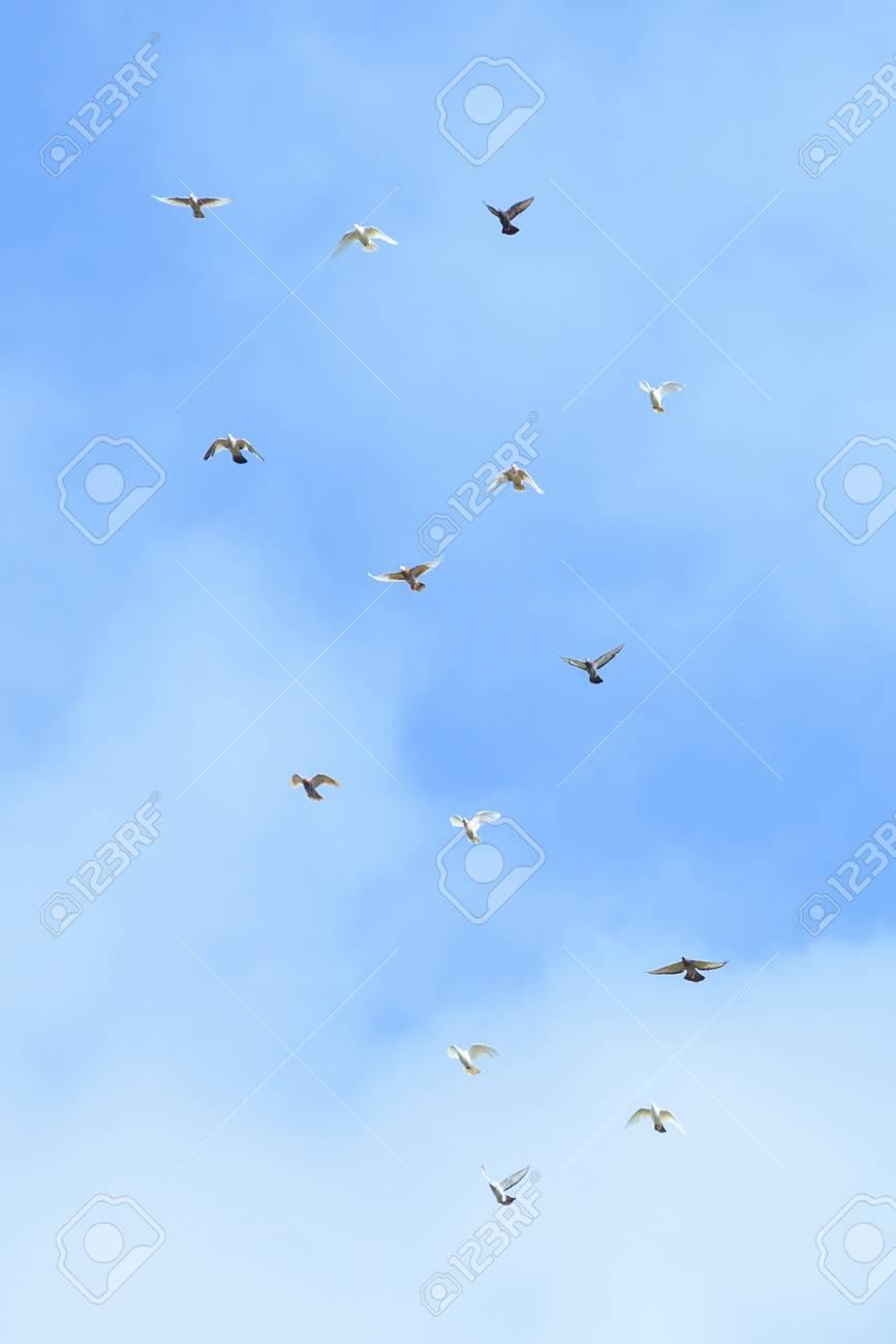 Palomas Blancas Y Negras Volando En El Cielo Azul Día Soleado En