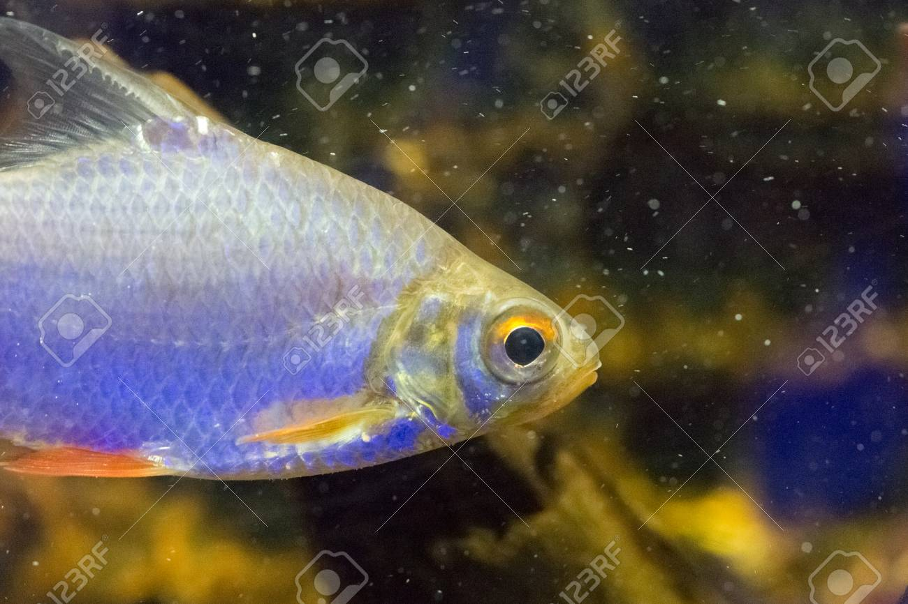 Hervorragend Schöne Bunte Fische Im Aquarium Lizenzfreie Fotos, Bilder Und YN66