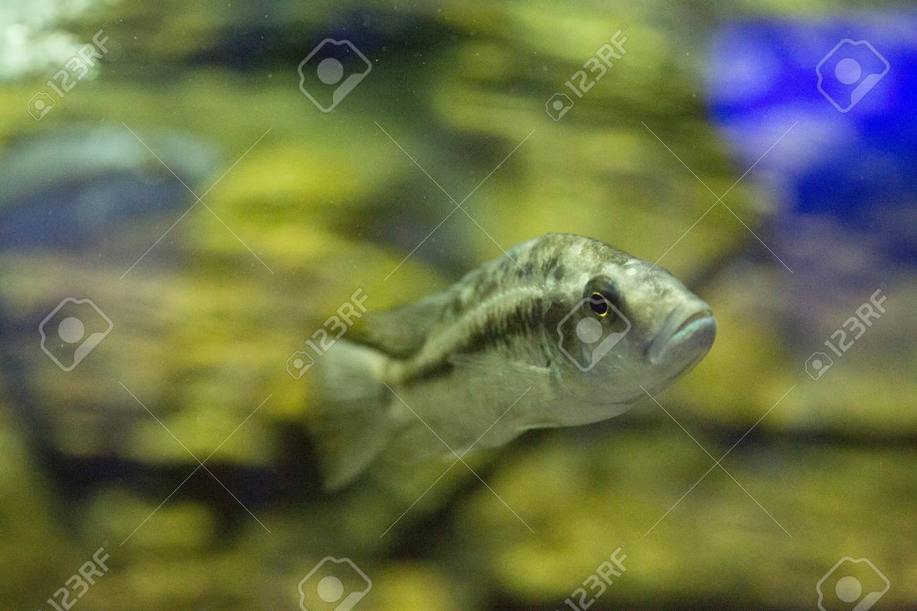 Beautiful Colorful Fish In The Aquarium Photo For You Stock Photo ...