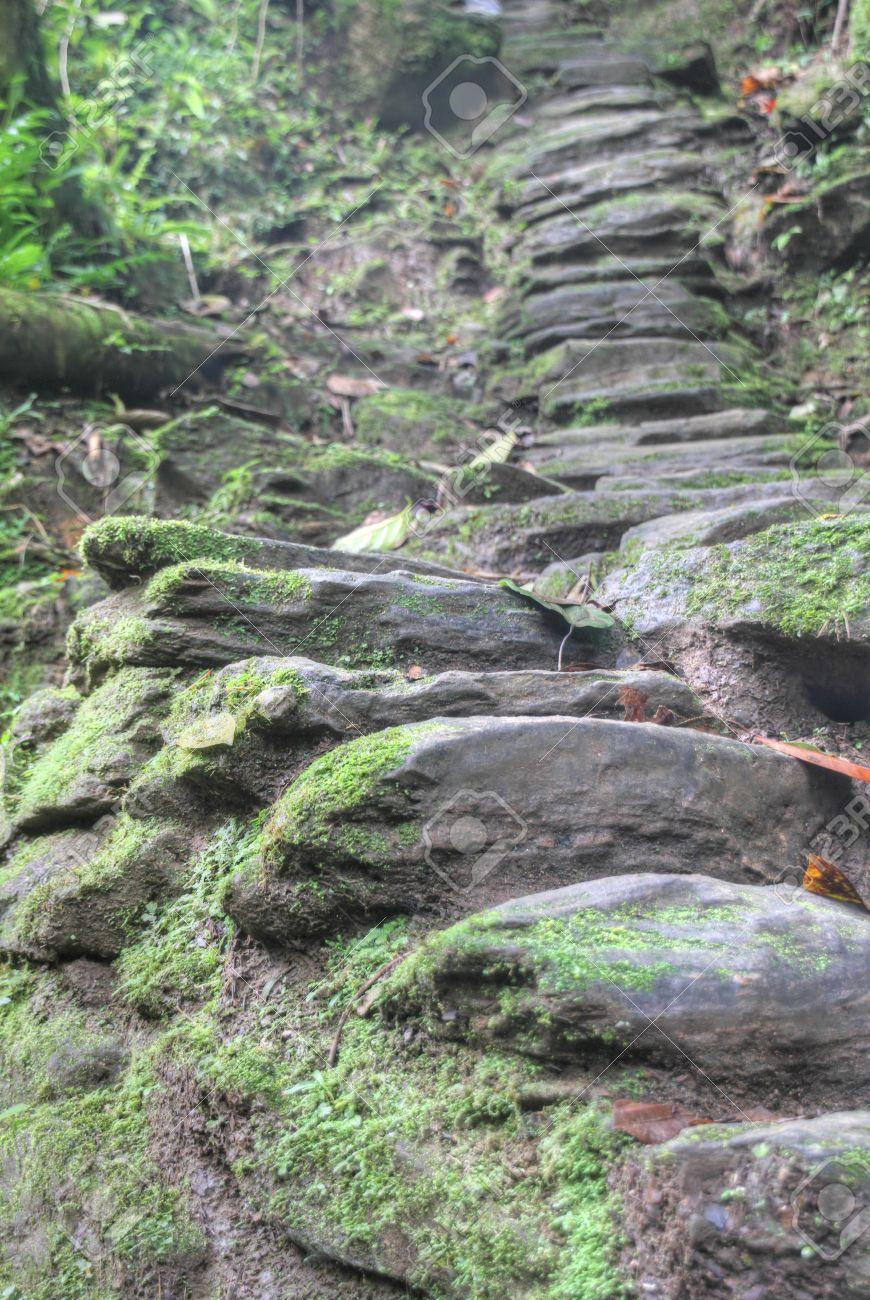 Escaleras De Piedra Construidas Por Los Indigenas Tayrona Anmericans Alrededor De 800ad Conducen A Ciudad Perdida Ciudad Perdida Sitio Arqueologico De Hoy S Parque Nacional Tayrona En Colombia 1200 Esas Escaleras Conducen