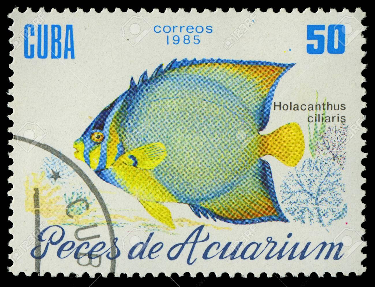 CUBA-CIRCA 1985  A stamp printed in Cuba shows fish Holacanthus ciliaris, circa 1985 Stock Photo - 17950379
