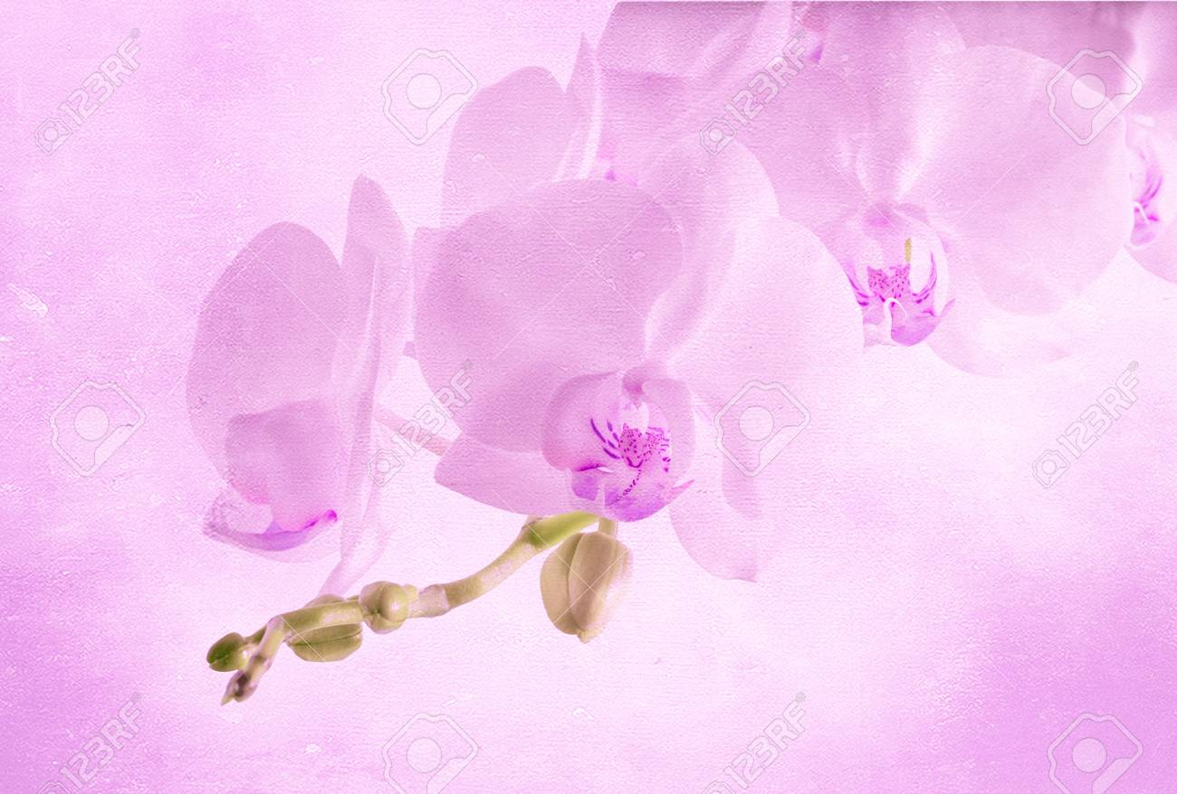 orchids on light background  Toned image Stock Photo - 18261030