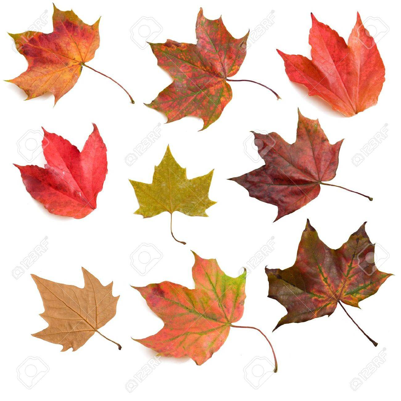 Set of autumn leaves Stock Photo - 5676369