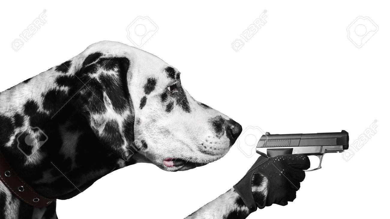 Pes - Stránka 5 44187805-dalmatian-dog-paw-holding-a-gloved-gun-and-takes-aim
