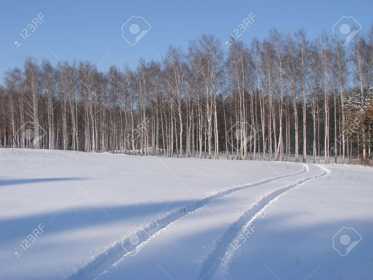 Winter snowy road thru forest Stock Photo - 741796