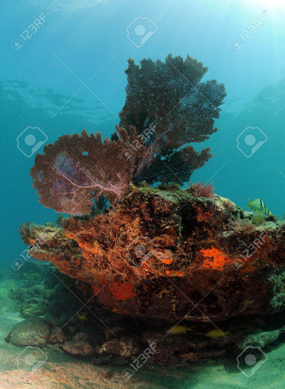 Beautiful underwater seascape with sea fan, hard coral and soft coral Stock Photo - 17818231