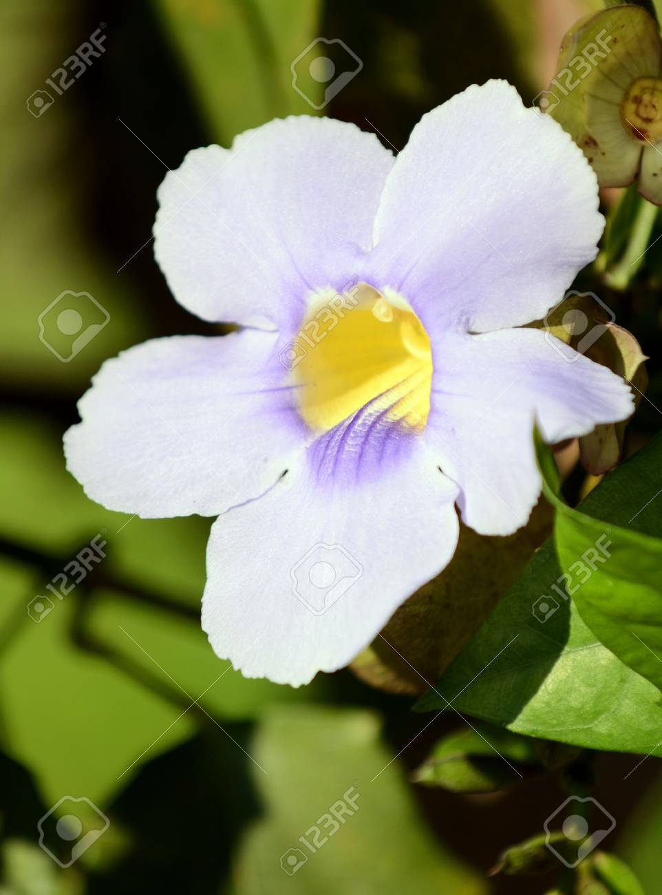 A Beautiful White Flower In Bloom In A Tropical Destination Stock