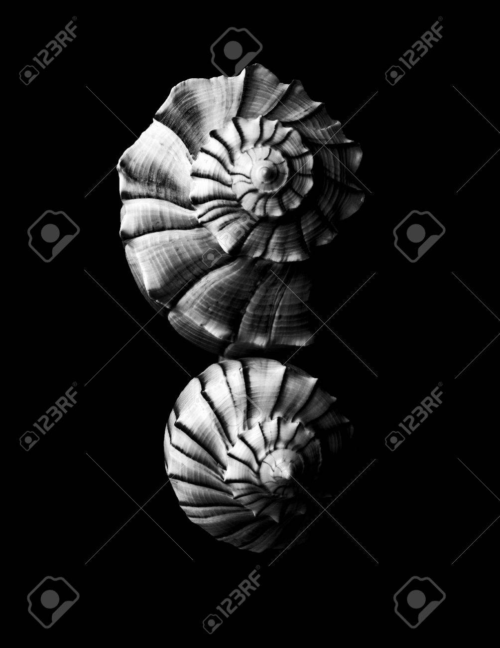 Black and white seashell background in nature