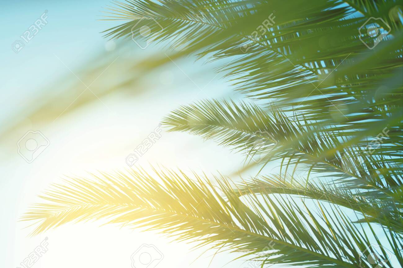 Palm leaves against blue sky at windy weather. Sea breeze, summer vacation. - 127496914