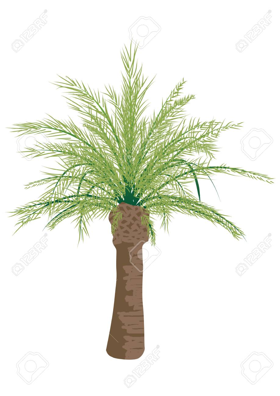 Palm tree isolated on white background, vector template - 110189791