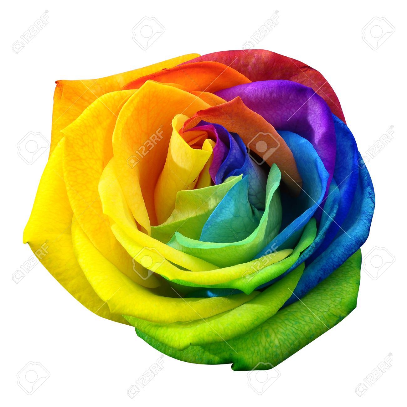 rainbow flower images u0026 stock pictures royalty free rainbow