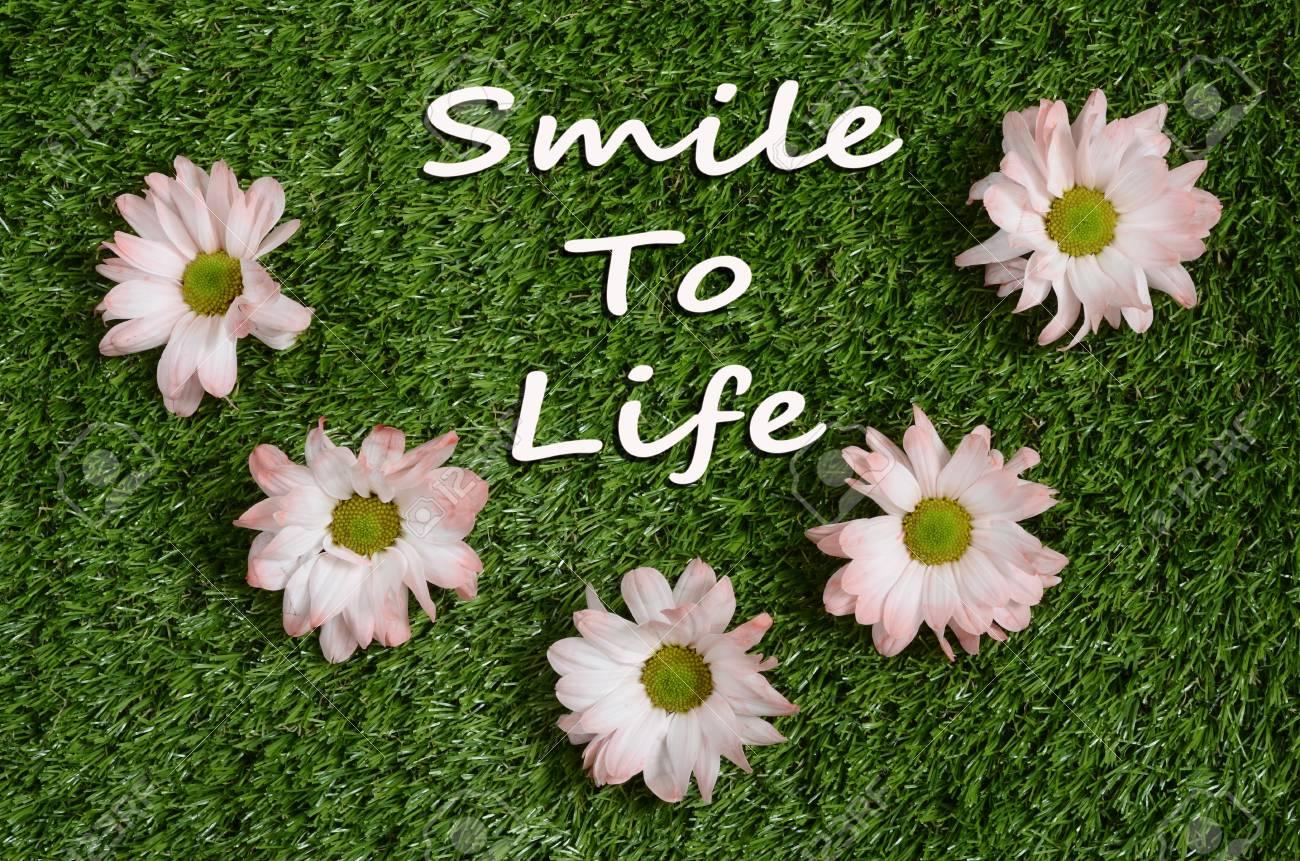 quote smile ton life and pink daisy flower on green lawn stock