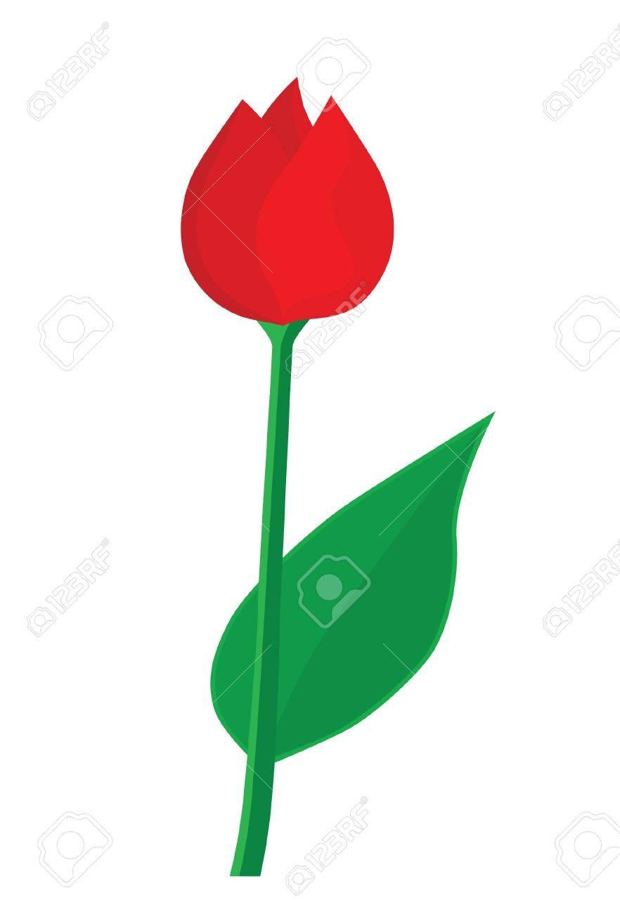 Red tulip Stock Vector - 16692548