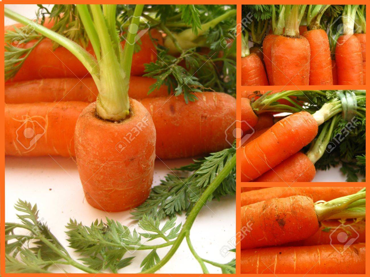 Carrot collage Stock Photo - 4368288
