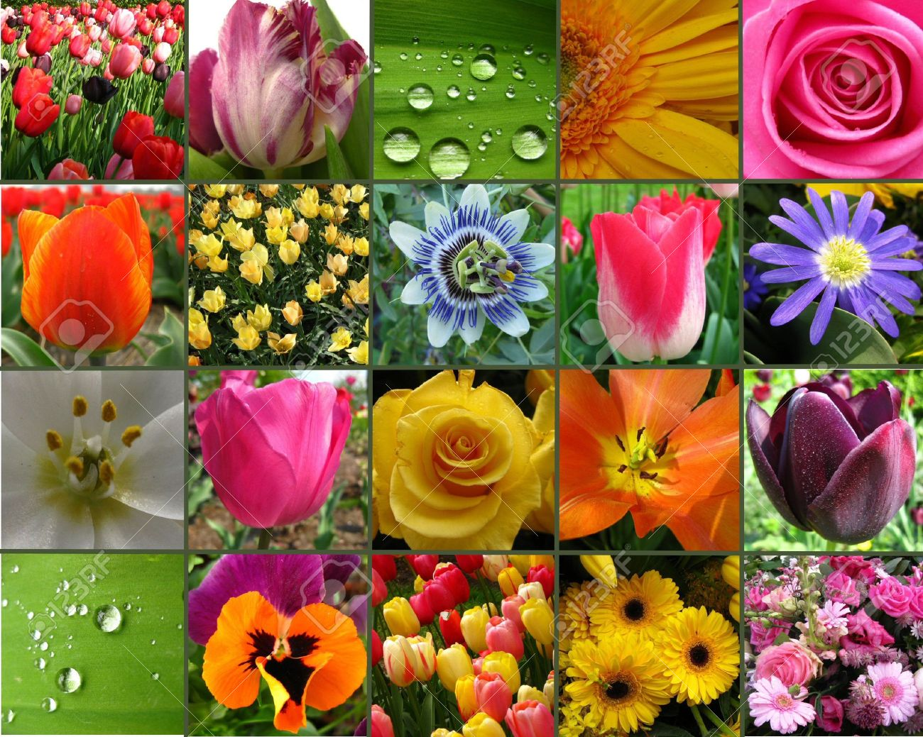 flower collage Stock Photo - 4772912