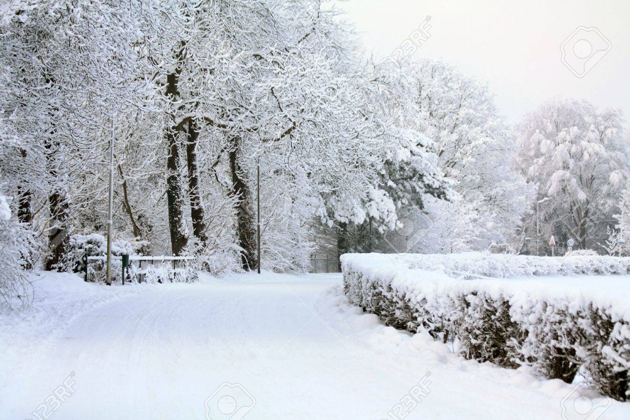 A windy road covered with snow and frozen trees in the background Stock Photo - 6230098