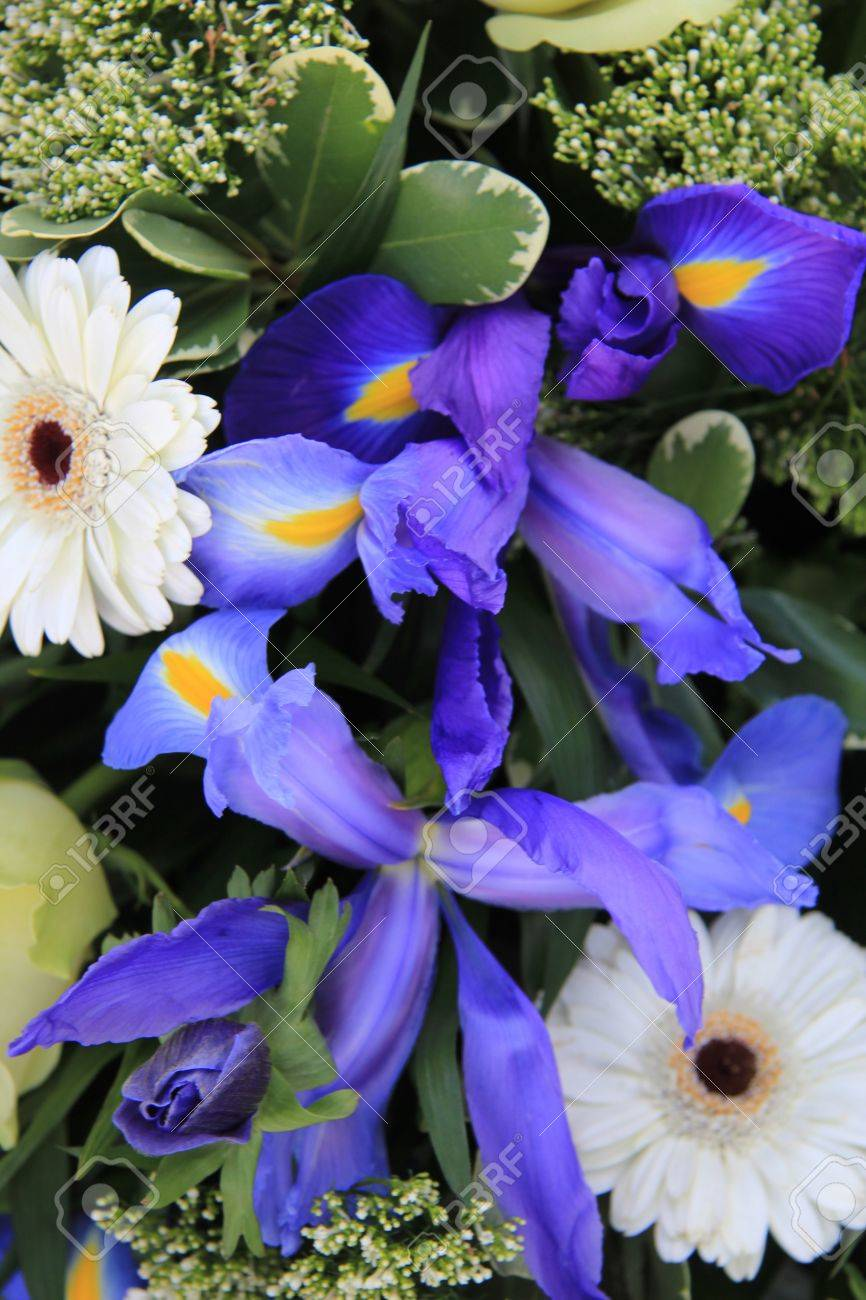 Blue and white flower arrangement with iris and gerbera stock photo blue and white flower arrangement with iris and gerbera stock photo 12015316 mightylinksfo