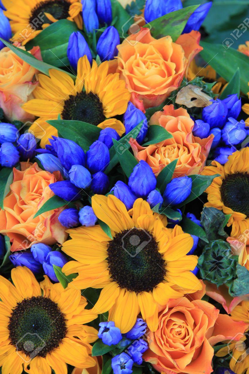 Super Composizioni Floreali Con Grandi Girasoli Gialli E Fiori Blu Foto  XR47