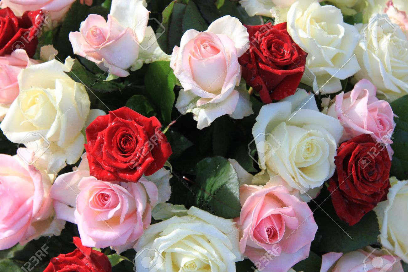 Floral Arrangement With Red Pink And White Roses Stock Photo
