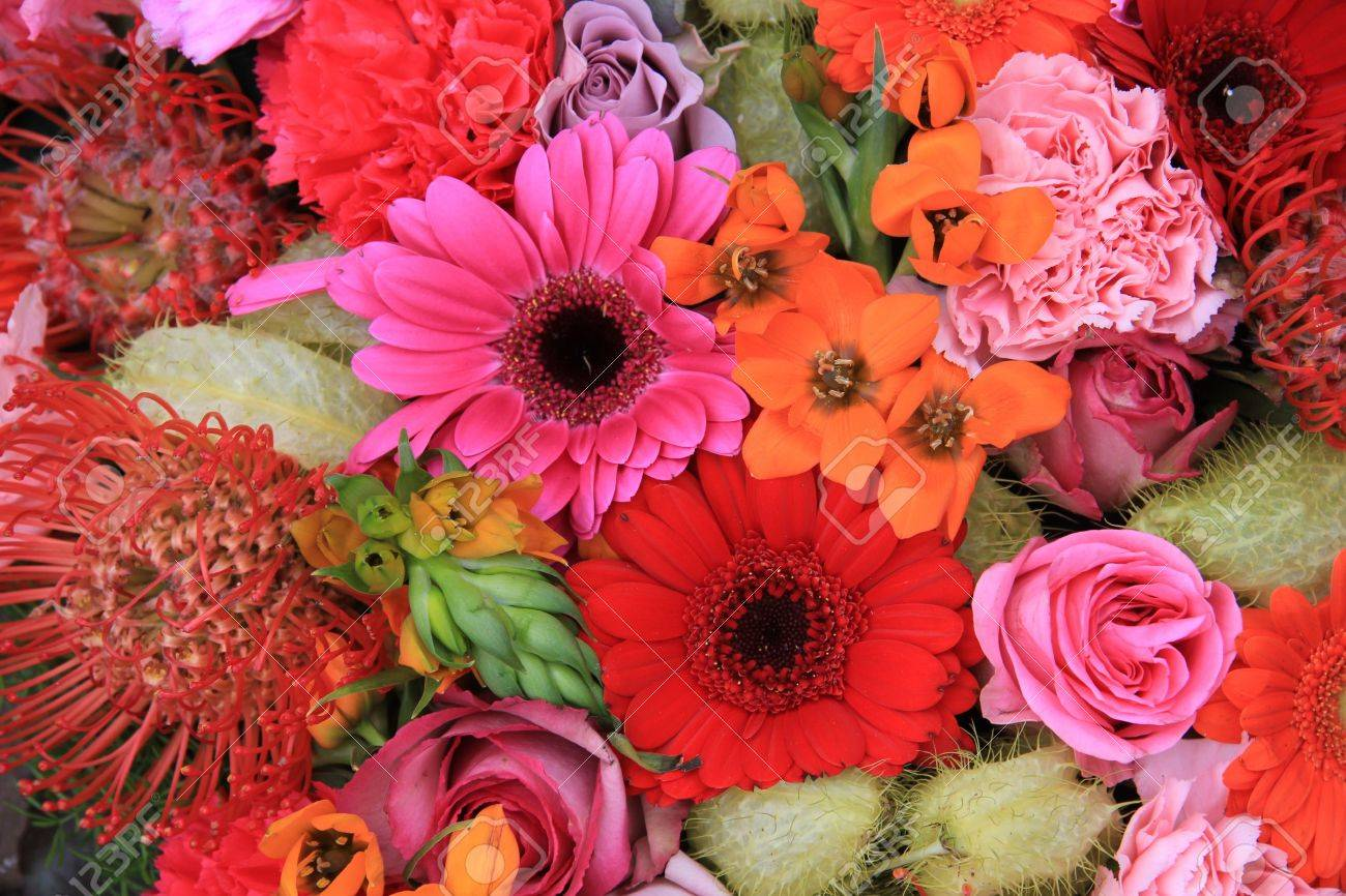 Red pink and orange flower arrangement with roses gerberas stock red pink and orange flower arrangement with roses gerberas and carnations stock photo mightylinksfo