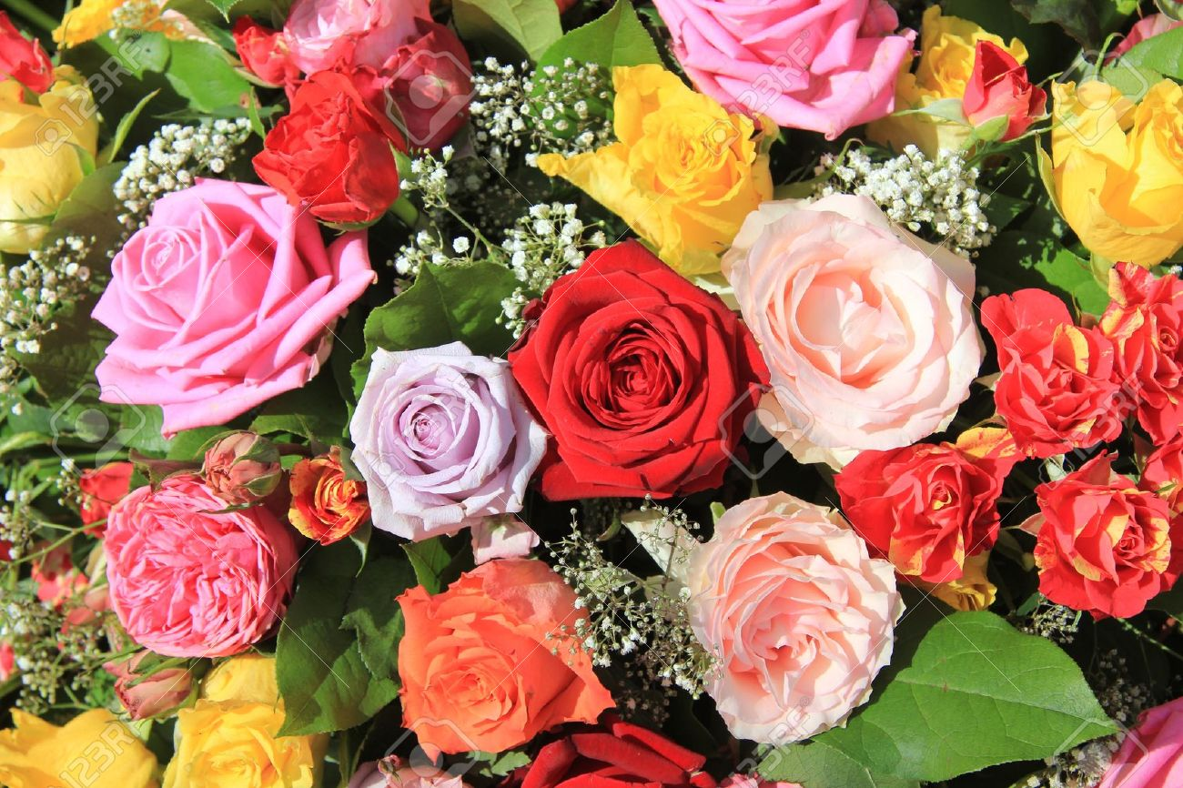 Mixed rose bouquet, big roses in bright colors - 13008677